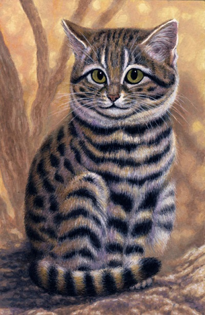 Small Spotted Cat by Willem.