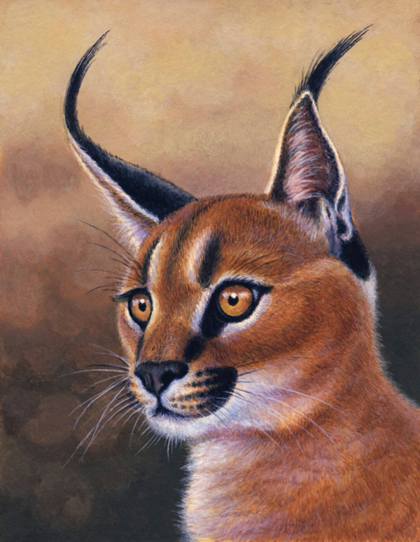 Caracal by Willem