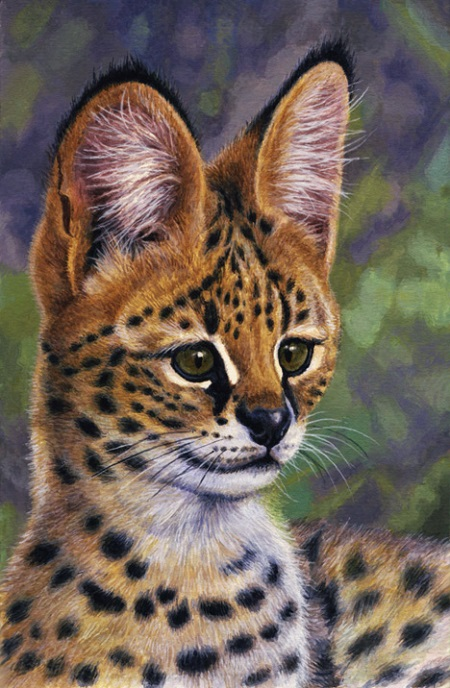 Serval  by Willem