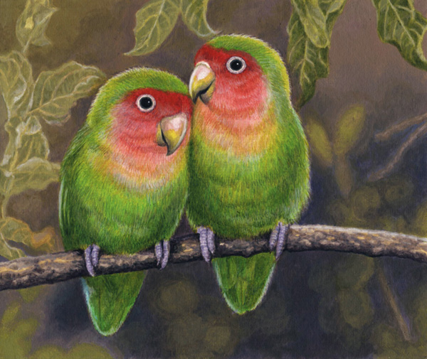 Rosyfaced Lovebirds by Willem