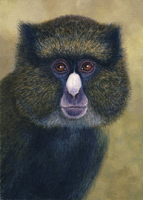 Putty-Nosed Guenon by Willem.
