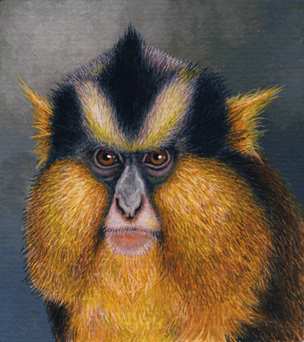 Crowned Monkey by Willem