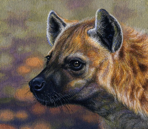 Spotted hyena by Willem.