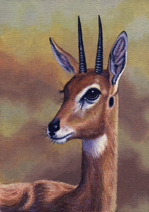 Oribi by Willem