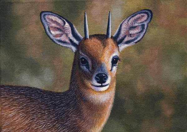 Cape Grysbok by Willem