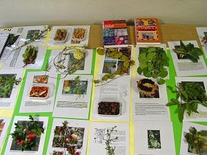 An edible plant seminar