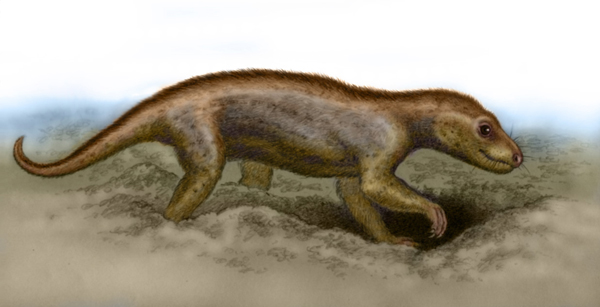 Thrinaxodon by Willem.