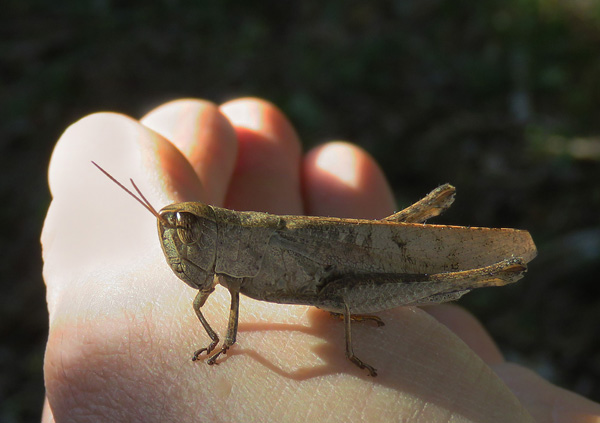 A grasshopper. Ugh. At least it's in South Africa.