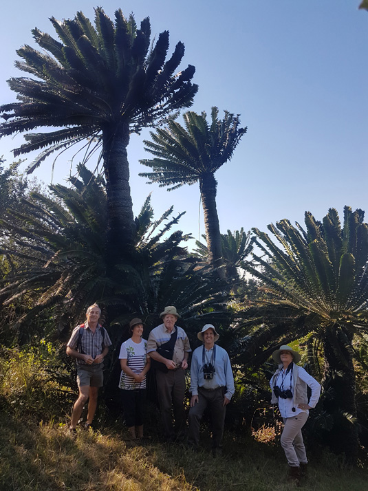 Modjadji Cycad Forest by Willem