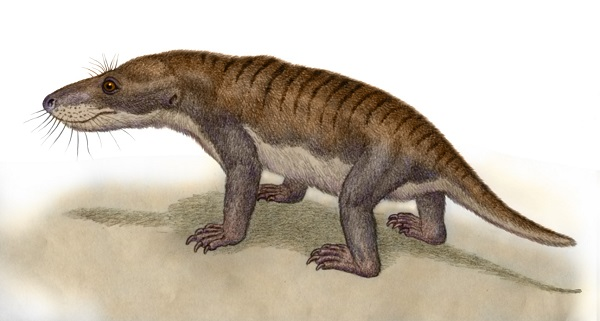 Therognathus by Willem