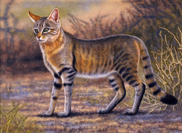 African Wild Cat by Willem