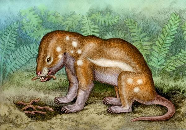 Kayentatherium by Willem