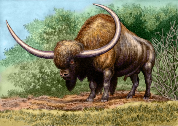 Bison latifrons by Willem