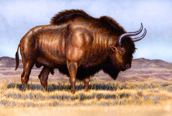 Bison Priscus by Willem