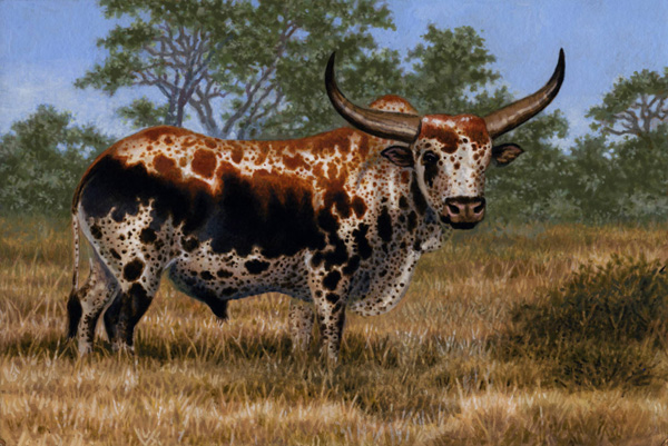 Nguni Bull by Willem