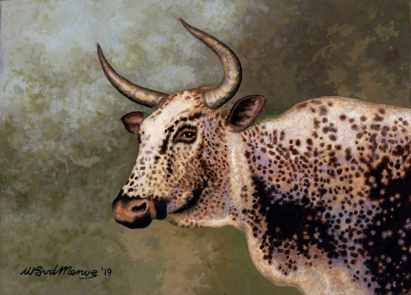 Nguni Cow by Willem