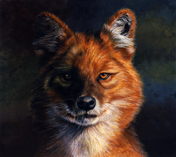 Dhole by Willem