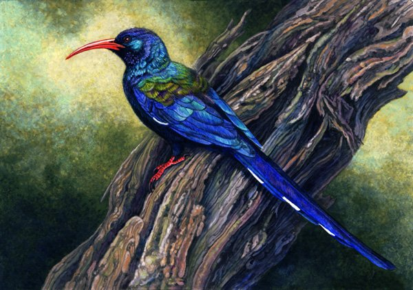 Green Wood-Hoopoe by Willem