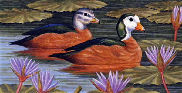African Pygmy Geese by Willem