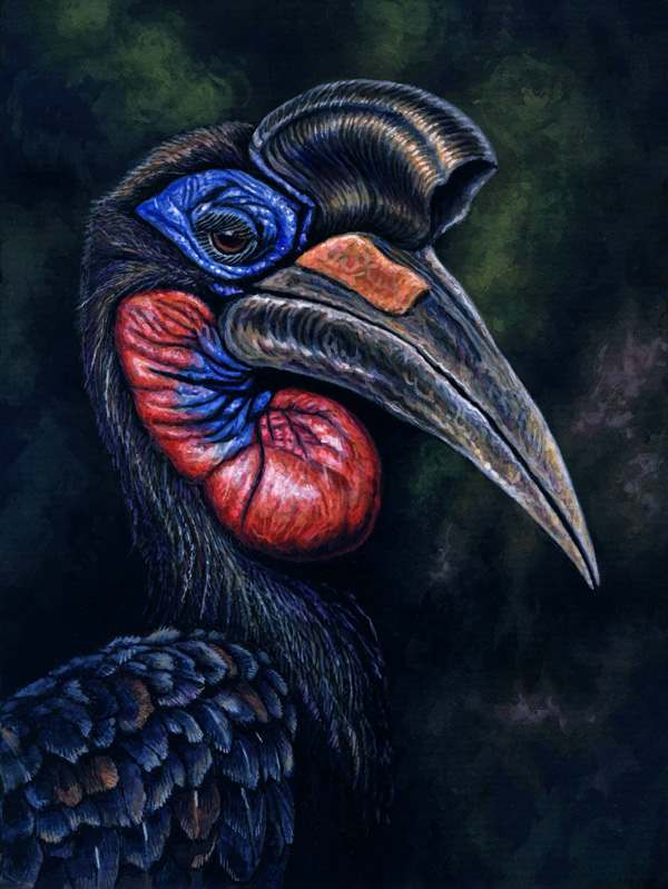 Northern Ground Hornbill by Willem