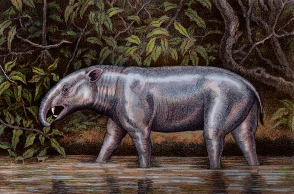 Hilarcotherium by Willem