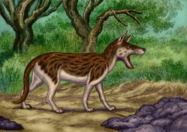 Hyaenodon by Willem