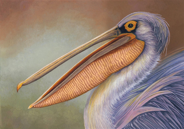Pink-Backed Pelican by Willem