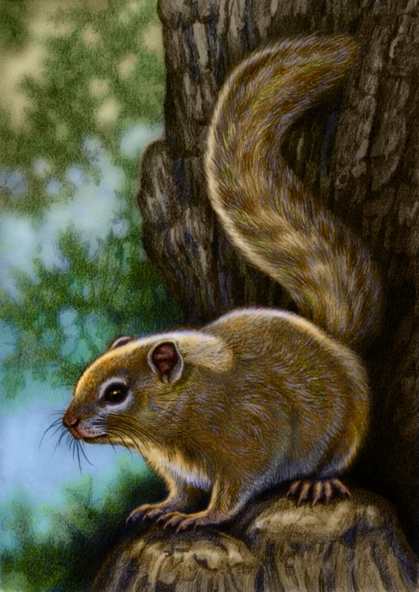 South African Tree Squirrel by Willem