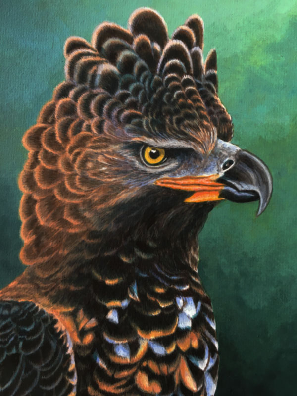 Crowned Eagle by Willem.