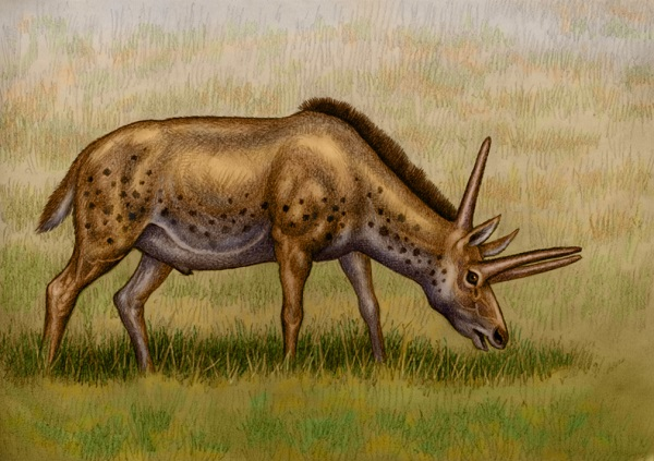 An ancient animal with very unusual horns, by Willem.