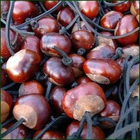 A pile of conkers with strings through them.