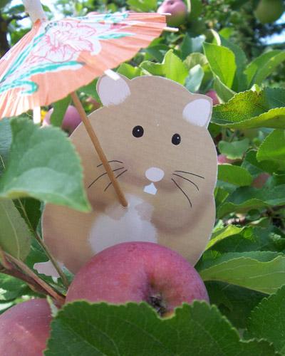 Elton in an apple tree.