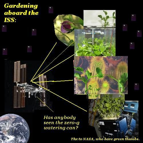 The ISS is into gardening, big-time.