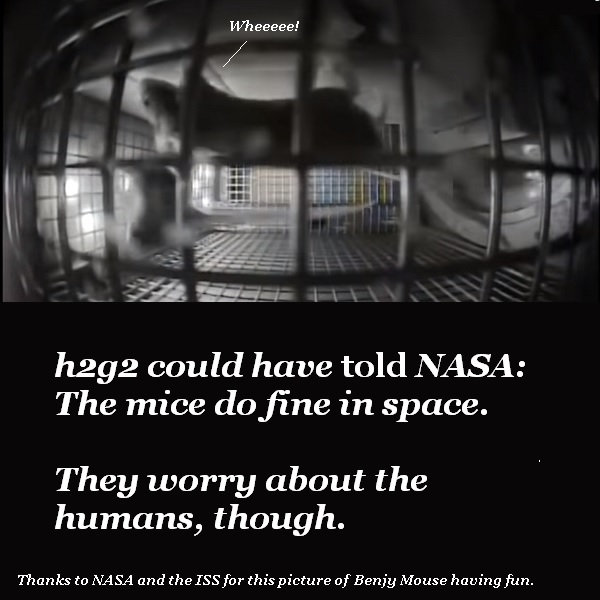 The mice are doing laps in microgravity and talking about their next diabolical plan to test humans.'