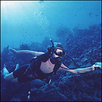 Scuba diving - an alternative holiday?