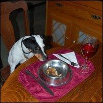 A dog enjoys his dinner.