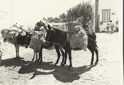 What are these donkeys doing on Patmos?