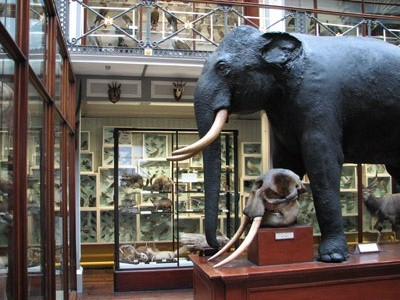 A picture of some of the exhibits at Dublin's Natural History Museum.