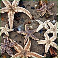 Starfish on a beach.