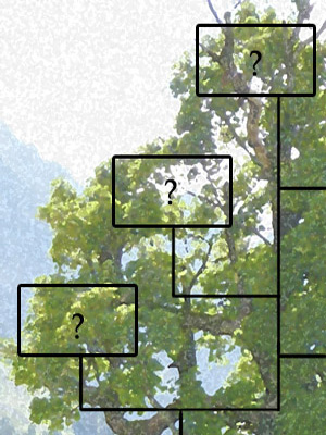 An artist's impression of a family tree.