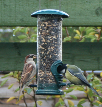 Garden birds on a birdfeeder.