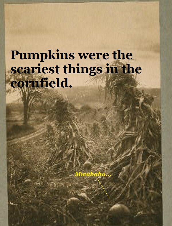 Peaceful cornfield with pumpkins.