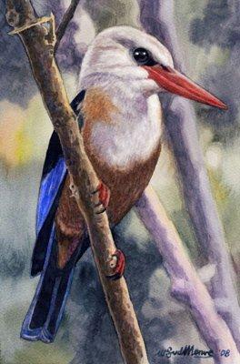 Greyheaded Kingfisher by Willem.