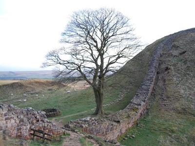 Hadrian's Wall at Sycamore Gap, with a tree.