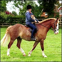 A woman - with a small dog on her lap - sits astride a brown horse.