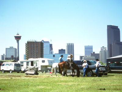 Horses and Skyscrapers at Calgary, Alberta, Canada