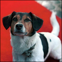 A picture of a small dog on a red carpet, taken from the 2001 BBC drama Station Jim.