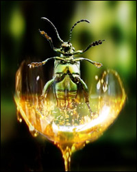 An insect in the process of being trapped in amber.