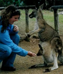 Feeding Kanger and Roo