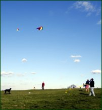 A blue sky, a perfect day to fly a kite.
